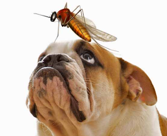 Heartworm Medication: Is Year Round Protection Necessary? | Truth4Dogs