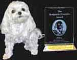 "Scared Poopless wins ""Best Health Care"" book for dogs."
